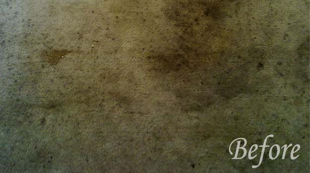 carpet cleaning in richardson tx