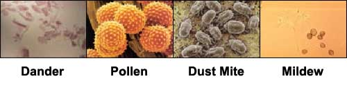 Found Inside Your Air Ducts